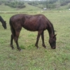 <p>THOROUGHBRED 4 YEAR OLD FILLY</p>